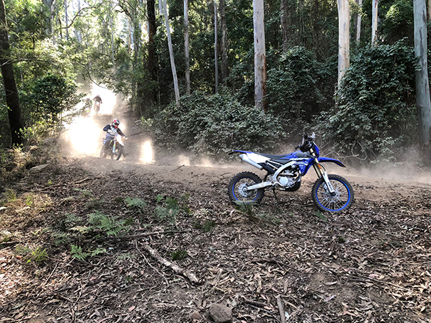 Forest fun at the Watagans